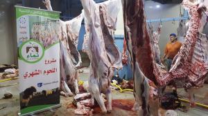ذبح 3 عجول و14 خروفًا - مشروع اللحوم الشهري